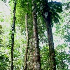 Suriname (13)