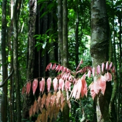 Suriname (14)