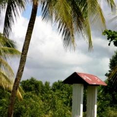 Suriname (19)