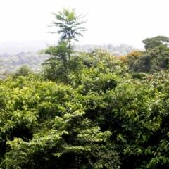 Suriname (2)