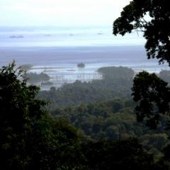 Suriname (3)
