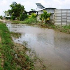 Suriname (32)