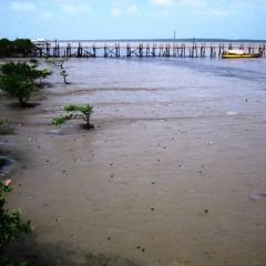 Suriname (34)