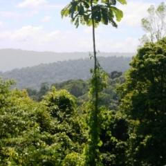 Suriname (4)