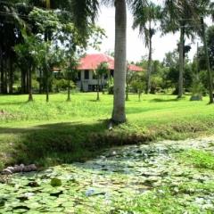 Suriname (5)