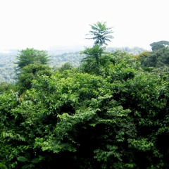 Suriname (6)