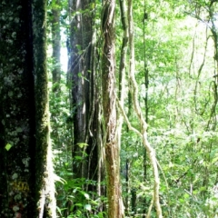 Suriname (8)