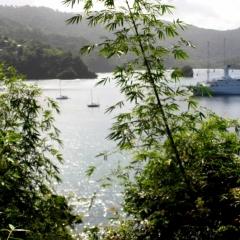 Tobago - Charlotteville (4)