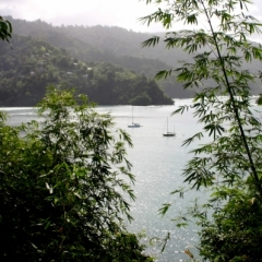 Tobago - Charlotteville (5)