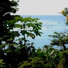 Tobago - Charlotteville (7)