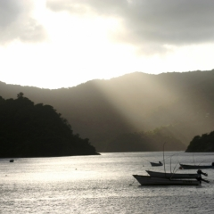 Tobago - Charlotteville (9)