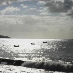 Tobago - in Castara (1)