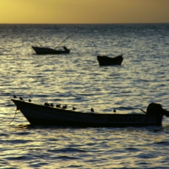 Tobago - in Castara (13)
