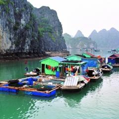 Vietnam (29)