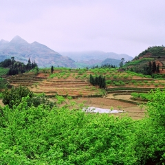 Vietnam (50a)