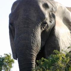 Zuid Afrika (3)