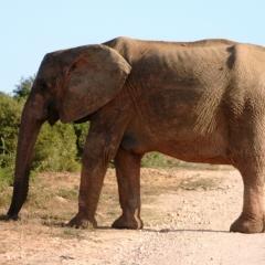 Zuid Afrika (4)