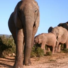 Zuid Afrika (6)