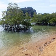 Zuid Thailand (15)